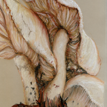 Mushroom Trio Pastel Painting
