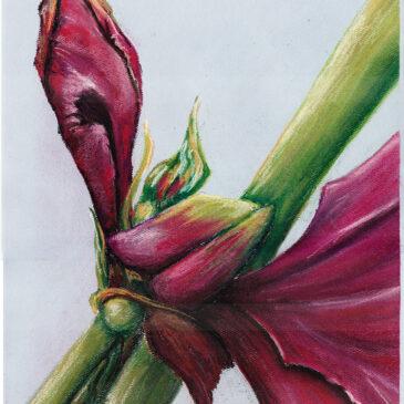 Magenta Buds Pastel Painting
